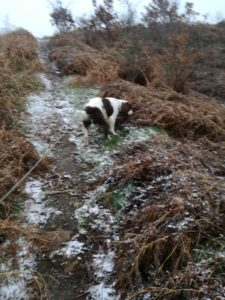 Oswestry Hill Fort, Shropshire, Dog walkers