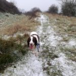 Barney being walked at Oswestry Hill Fort