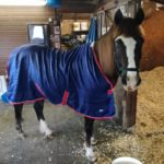 Otto the horse by Mere Mutts dog walking and animal care service